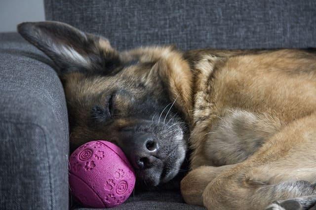 気持ち良さそうに寝る犬